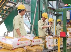 Phân bón Mặt Trời Mới chuẩn bị sản xuất phục vụ vụ Đông Xuân 2019-2020