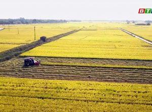 Phân bón Mặt Trời Mới hỗ trợ nông dân liên kết sản xuất theo chuỗi giá trị tại Tỉnh Bình Định