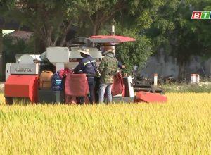 Nông dân Bình Định được mùa được giá vụ Đông Xuân 2019-2020
