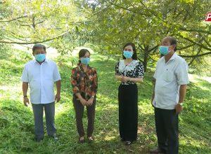 Mặt Trời Mới Cùng Nhà Nông Làm Giàu – Chăm sóc cây sầu riêng giai đoạn ra hoa đậu quả